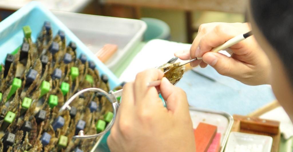 11養殖技術が真珠の歴史を変えた!!真円真珠形成法による真珠養殖技術