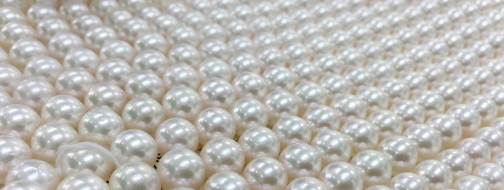 8日本の真珠といえば、アコヤ貝、日本のアコヤと世界のアコヤの違いとは
